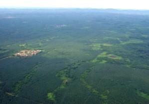 liberia, aérien, caoutchouc, plantation