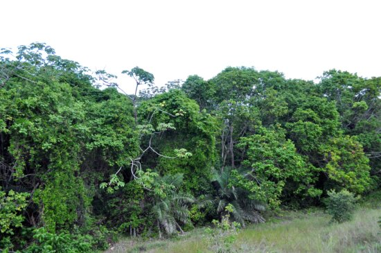 tropical forest, trees, woods