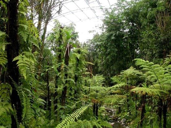 madagascar, conserving, biodiversity, protecting, farmers, livelihoods