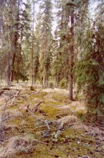 moss, lichen, vegetation, cover, boreal, forests, floor