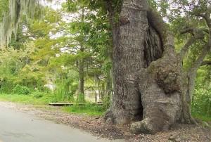 matka, strom