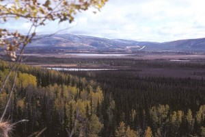 mountain, forest, fields, wallpaper