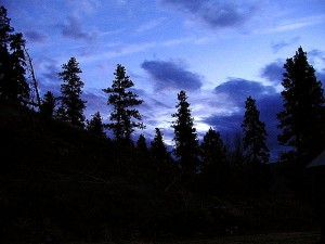 night, trees, forest