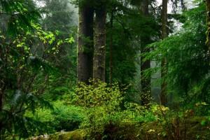 vieux, croissance, littoral, forêt