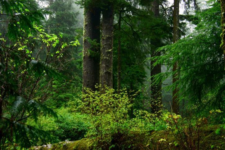 old, growth, coastal, forest
