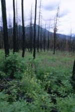 피난처, 숲, 서식 지