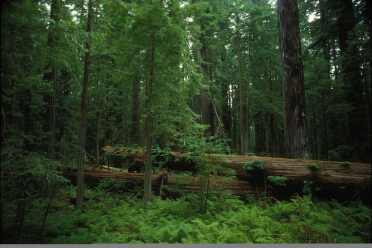 scenic, forest, habitat