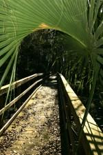 petit, pont, chemin, tropical, forêt