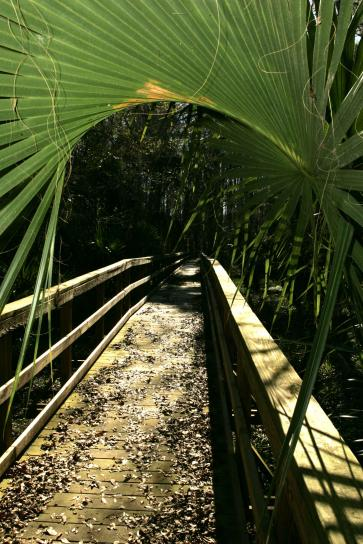 small, bridge, path, tropical, forest