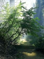 smokey, chemins, sentiers, forêts, bois