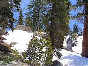 neige, Pinetrees, forêt, bois
