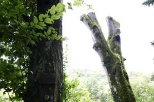 fák, erdők