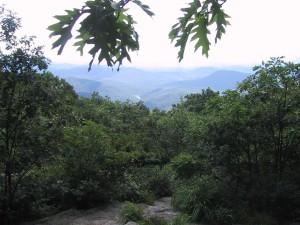 al sur, América, selva tropical