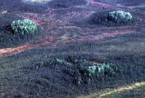 smreke, šuma, nacionalnih, rezervat