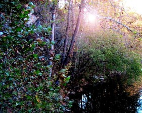sun, trees, copper, creek