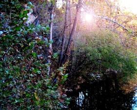 Sunce, šume, bakar, potok