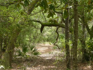 ensoleillée, sentier, forêt, maritime, forêt, habitat