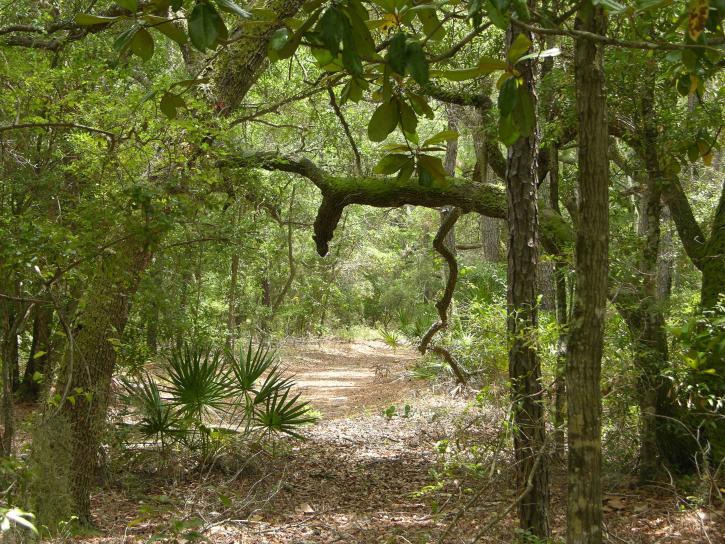 chiếu, đường dẫn, rừng, biển, rừng, môi trường sống