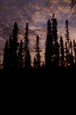 coucher du soleil, forêt