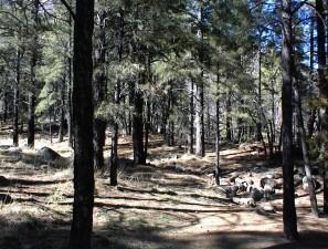 gennemsnit, skov, flagstaff