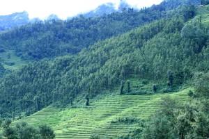 national park, green forest, hills, nature