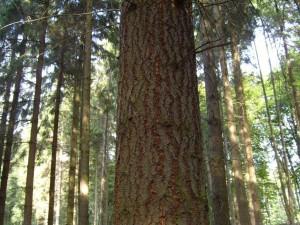 ลำต้น ป่า ต้นไม้
