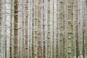 fák, tuskók, erdő