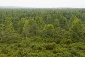 vert, forêt, observation, tour