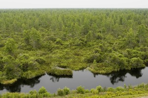 lac, forêt, observation, tour