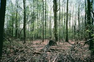 zones humides, forêt