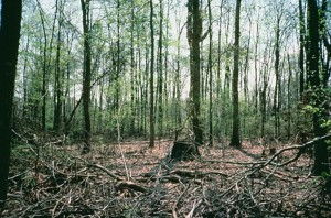 mokrade, lesné
