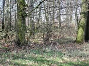 wild, woods