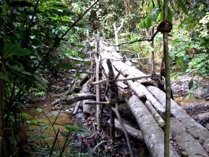 wooden, bridge, built, natural, products, cross, swampy, marshy, area, okapi, fauna, reserve
