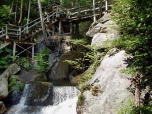 wooden, bridge, forest, water, rocks