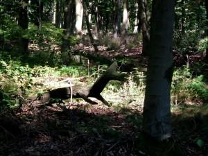 woodland, scene
