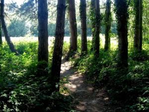 woodland, scenes