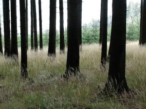 woods, nature