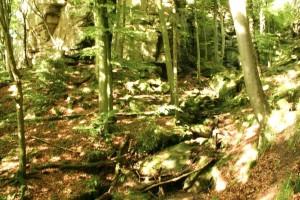 növények, erdő