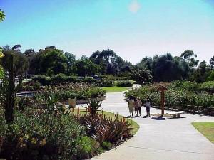 balboa, park, roses, garden, green