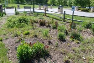 motýl, zahrada, patuxent, výzkum, útočiště