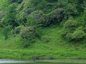deerpark, Ireland, ponds, bushes, trails