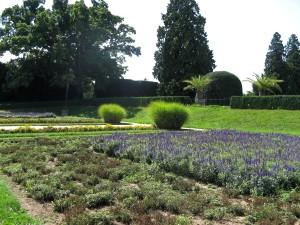 Blume, Garten, Park