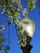 floraison, arbres, parc
