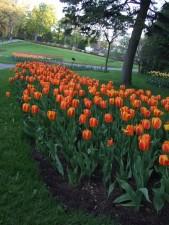 fleurs, bloomig, jardin