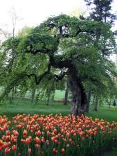 fleurs, jardin, arbre