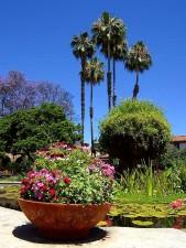 green, flower, park