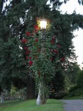 lampe, jardin