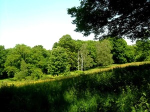 local park, green grass, summer, trees, national park