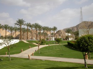 palm trees, park