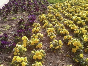 park, flowers